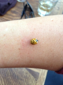 Lady bug started to pinch, and noticed my arm was RED.